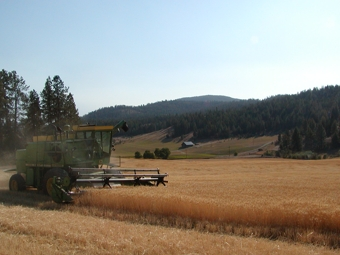 View of our combine (Luke Strawwalker) during wheat harvest