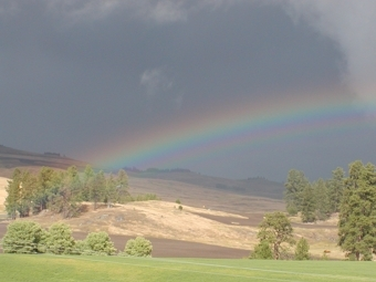 Our Gold at the end of the rainbow is Dry Gulfh Farms.